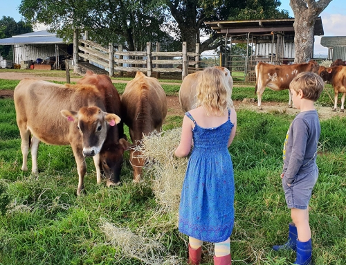 Loving sustainability on the farm