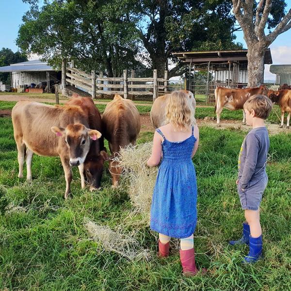happy children and calves