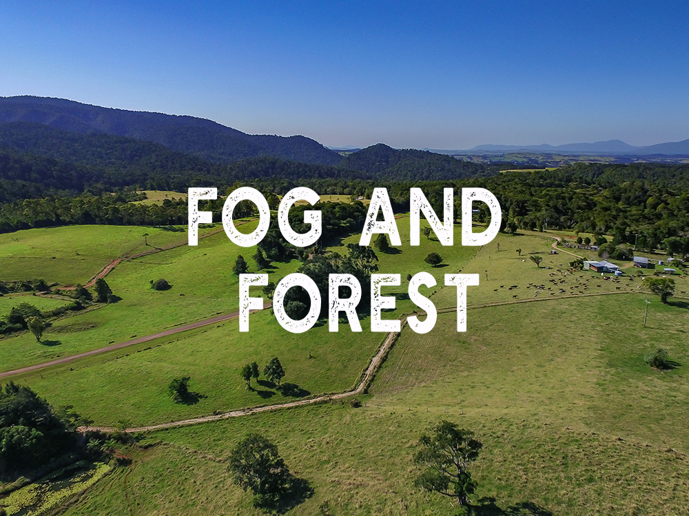 fog and forest farm